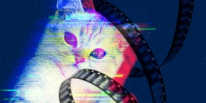 All About Cats – A Conversation with Will Braden on the Cat VideoFest