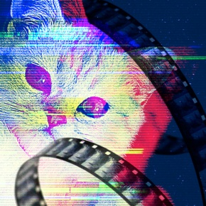 All About Cats – A Conversation with Will Braden on the Cat Video Fest